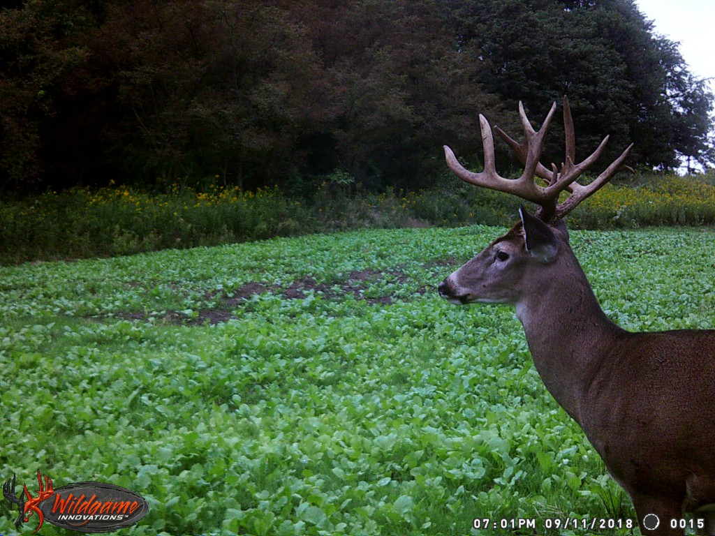 hunting packages hunt options at hidden hollow white tail ranch