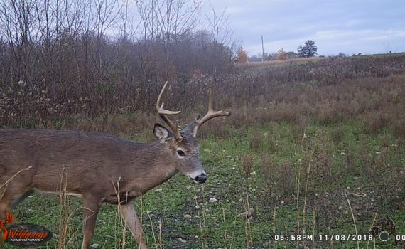 Whitetail buck, whitetail deer, Hidden Hollow Whitetail Ranch, trailcam