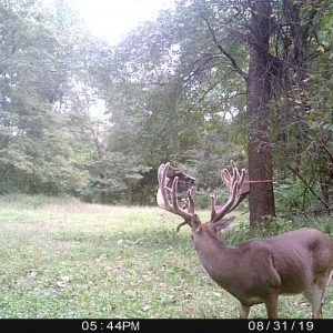 deer cam 2019, Hidden Hollow Whitetail Ranch, ohio whitetail trail camera