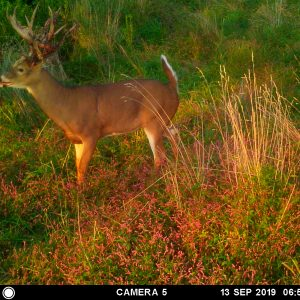 whitetail hunting ranches, Hidden Hollow Whitetail Ranch