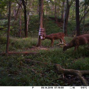 deer cam 2019